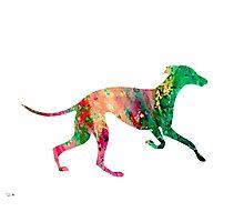 Greyhound 2 Photographic Print