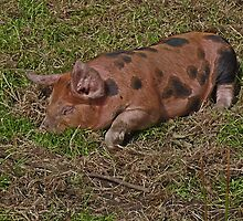Let Sleeping Piglets Lie by Kat Simmons
