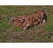 Let Sleeping Piglets Lie Photographic Print