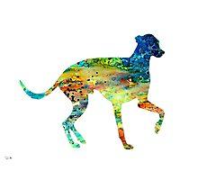 Greyhound 3 Photographic Print