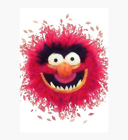 Muppets - Animal Photographic Print