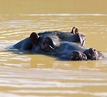 Happy as a Hippo by HaleyRenee