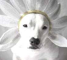 Pittie Flower by Believeabull