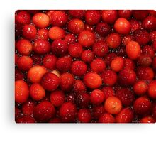 Cranberries for Christmas Canvas Print