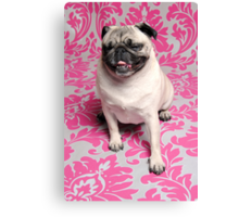 The Laughing Pug Canvas Print