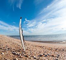 Beach feather. by bashta