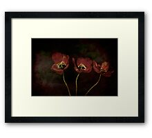 Three Red Tulips Framed Print