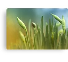 Waiting for the right moment... Canvas Print