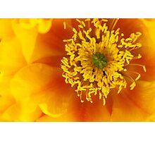 Cactus Flower Photographic Print