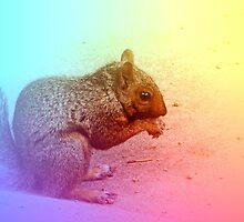 Squirrel in Winter by Marie Van Schie