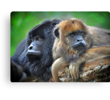 Howler Monkeys Canvas Print