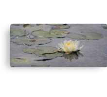 The lotus flower of Bethesda Fountain Canvas Print