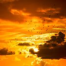 flocks of starlings flying into an orange sunset sky by morrbyte