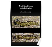 The Ochre Dagger Moth Caterpillar Poster