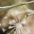 Ladybug by Lynn Starner