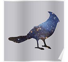 stellar's jay Poster