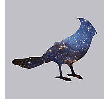 stellar's jay Photographic Print