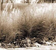 Maplewood, MN: Wheat Grass by ACImaging