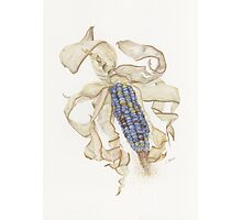 Dried Indian Corn Photographic Print