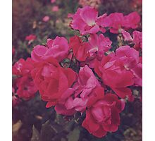 Faded Floral Photographic Print
