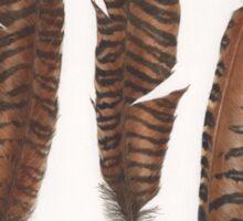Pheasant roadkill Sticker