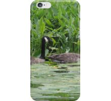 Geese All in a Row iPhone Case/Skin