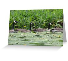 Geese All in a Row Greeting Card