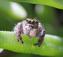 Do spiders have a tongue? by Sheryl Hopkins