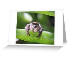 Do spiders have a tongue? Greeting Card