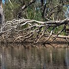 dead tree in the river by BigAndRed