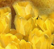 Watercolor Yellow Tulips with Chevron by Carol Vega