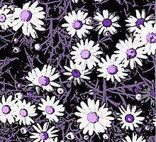White Daisies - Purple Centers by Sandra Foster
