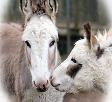 Donkey Love by Cynthia48