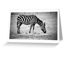 Plains Zebra Greeting Card
