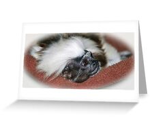 Cotton-top Tamarin Greeting Card