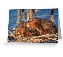 Lay your head on my shoulder Greeting Card