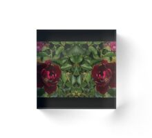 Red Red Roses Acrylic Block