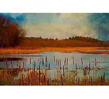 Great Meadows painted with cattails Photographic Print