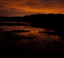 Edge of nightfall – Great Meadows series by Owed to Nature