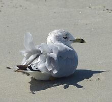 Ruffled Feathers by MaryinMaine