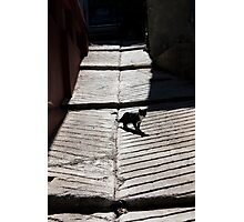 Cat walking in the street Photographic Print