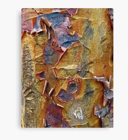 Paper Bark Abstract Canvas Print