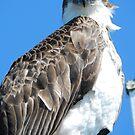 Eagle Eye by hans p olsen