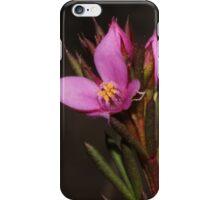 Boronia falcifolia iPhone Case/Skin