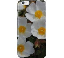 Cistus salviifolius iPhone Case/Skin