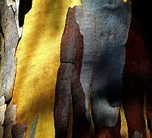 Nature's Abstract Art. Tree Bark. by ronsphotos