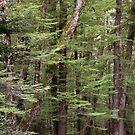 Birch Forest by Werner Padarin