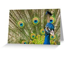 Indian Peafowl Greeting Card