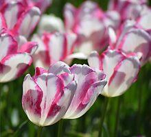 Delicate, sunshiny blooms by ShonaI