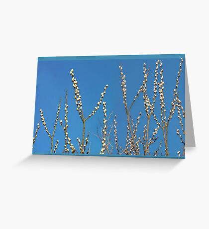 Blue Willow Sky Greeting Card